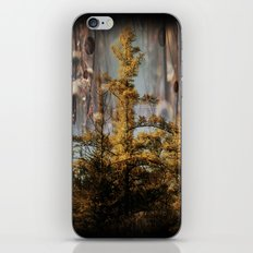 Swampy Forest Of Dreams iPhone & iPod Skin