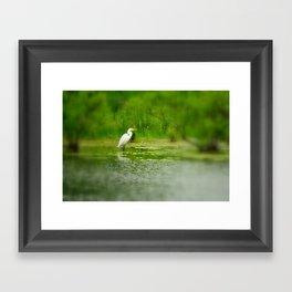 Marsh Egret Framed Art Print