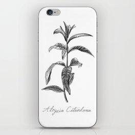 Lemon Verbena Botanical Illustration iPhone Skin