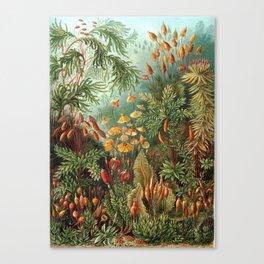 Vintage Plants Decorative Nature Canvas Print