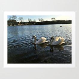 Irish Swans Art Print