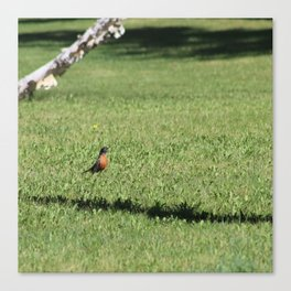 robin and dandelion Canvas Print