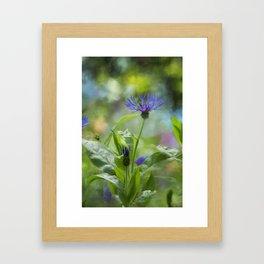 Splendor in the Garden Framed Art Print
