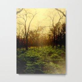 Lambent Woods Metal Print