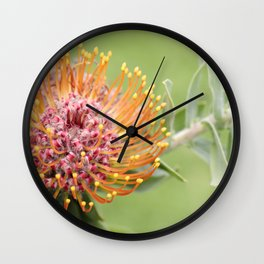 Pincushion Protea Wall Clock