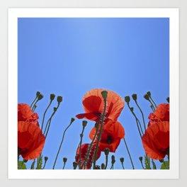 summer poppy IX Art Print