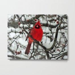 Northern Cardinal, male Metal Print
