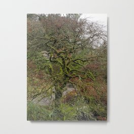 Tree with Twisted, Mossy Branches Metal Print
