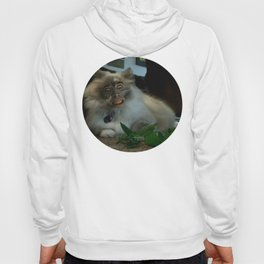 Nicolas Cage Cat Wants Nip Hoody
