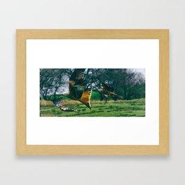 Red Kites. Framed Art Print