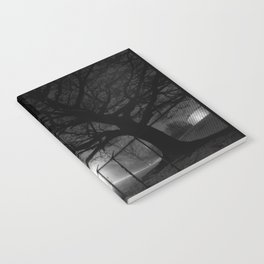 Oak in Evening Fog Notebook