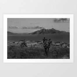 Joshua Tree Death Valley Art Print