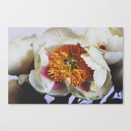 Spring Peony Canvas Print