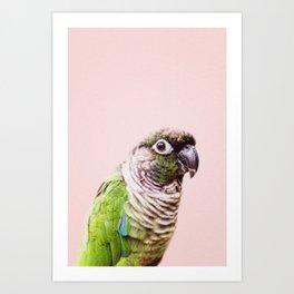 Parot Photography | Peek-a-boo | Tropical | Wildlife | Bird | Blush Pink Art Print