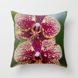 Orchid Phalaenopsis 7989 Throw Pillow