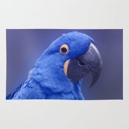 Blue Hyacinth Macaw - Anodorhynchus hyacinthinus - Puohokamoa Hoolawa Maui Hawaii Rug