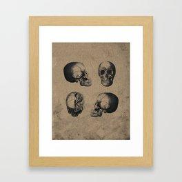 Skull View - Antique Vintage Style Medical Etching Framed Art Print