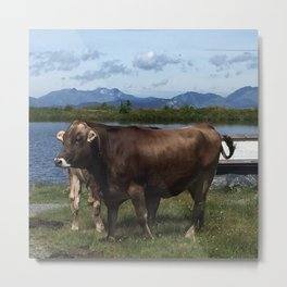 Cows guarding the lake Metal Print