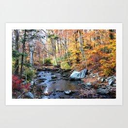 Autumn Woodlands Art Print