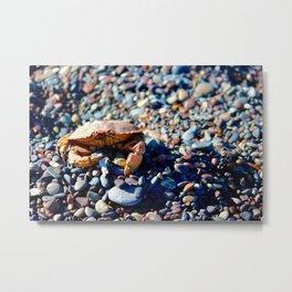 The Smoking Crab Metal Print