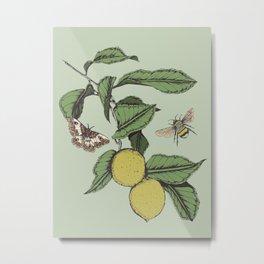 Lemons in Spring Metal Print