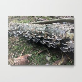 Fairies. Rushmere Country Park, Bedfordshire Metal Print