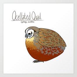 Ocellated Quail Art Print
