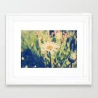 rileigh smirl Framed Art Prints featuring Daisy by Rileigh Smirl