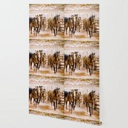 Stampede Wallpaper