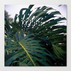 Holy Palms Canvas Print