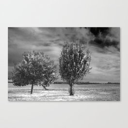 Suburban trees Canvas Print