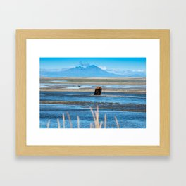 Grizzly Bear looking for salmon Framed Art Print