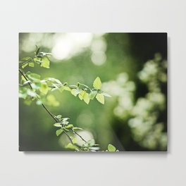Green Nature Leaf Photography, Tree Branch, Dark Green Leaves Art, Botanical Branches Photo Metal Print