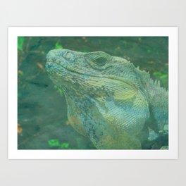Wild Iguana Art Print