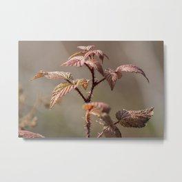 Thorn Bush In The Fall Metal Print