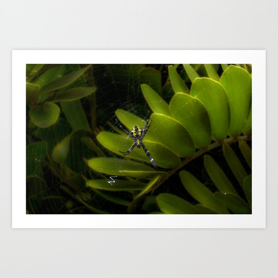 Tropical spider Art Print