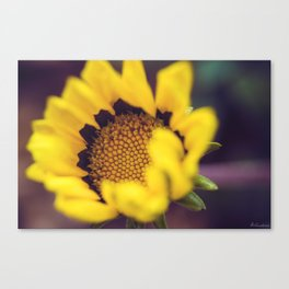Summer in a sunflower - Floral Photography #Society6 Canvas Print