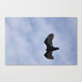 Found Prey  Canvas Print