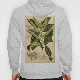 Quercus densiflora 143 8695 Hoody