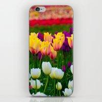Fields of Color III, Woodburn Tulip Festival iPhone & iPod Skin