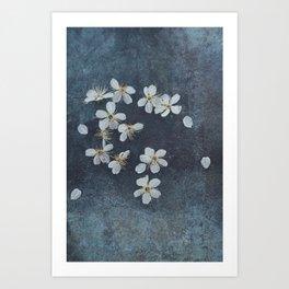 Delicate Sakura Blossom Art Print