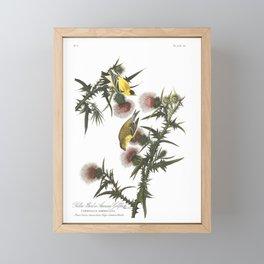 American Goldfinch (Audubon) Framed Mini Art Print