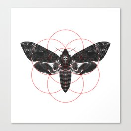Sacred Death's-head Hawkmoth Canvas Print