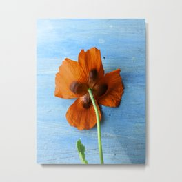 Red Poppy on Blue Metal Print