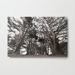 Cypress Tunnel Metal Print