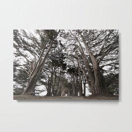 Cypress Tunnel Metal Print