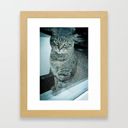 Cat on a ledge!  Framed Art Print