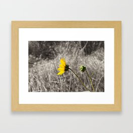 Sunflower Daydream Framed Art Print