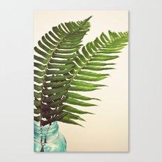 Ferns II Canvas Print