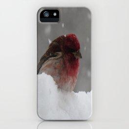 Purple GrosBeak Bird iPhone Case